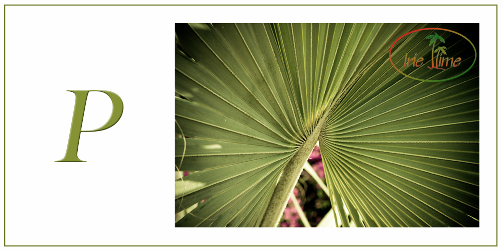 P is for PALM