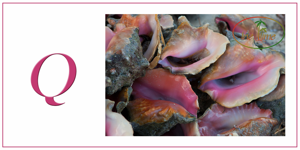 Q is for QUEEN CONCH