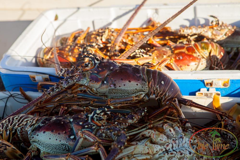 lobster dinner-3