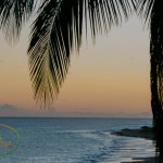 Anguilla Trip Report: November-December 2014