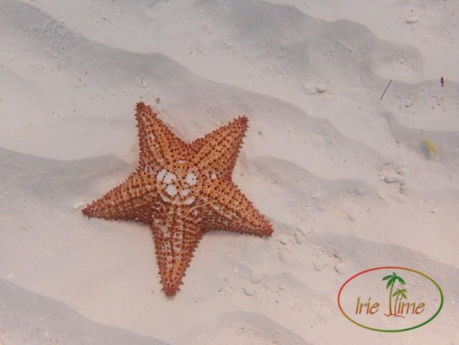 CuisinArt Beach-28