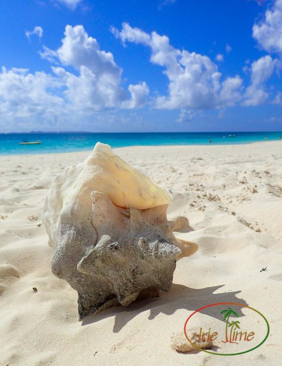 CuisinArt Beach-33