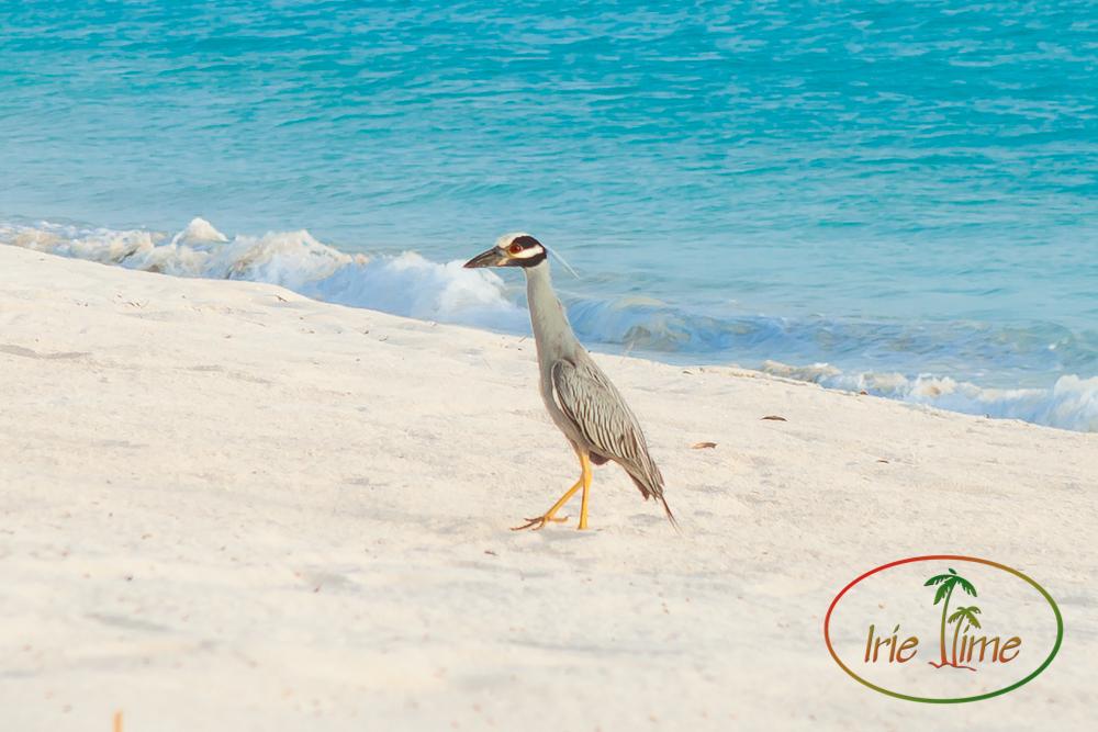 Barbuda Beach-1