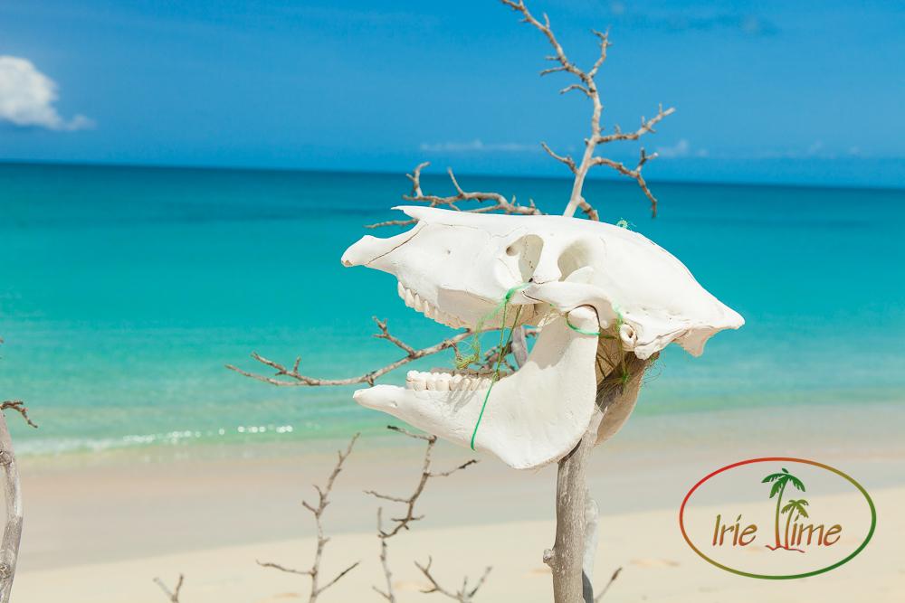 Barbuda Beach-31