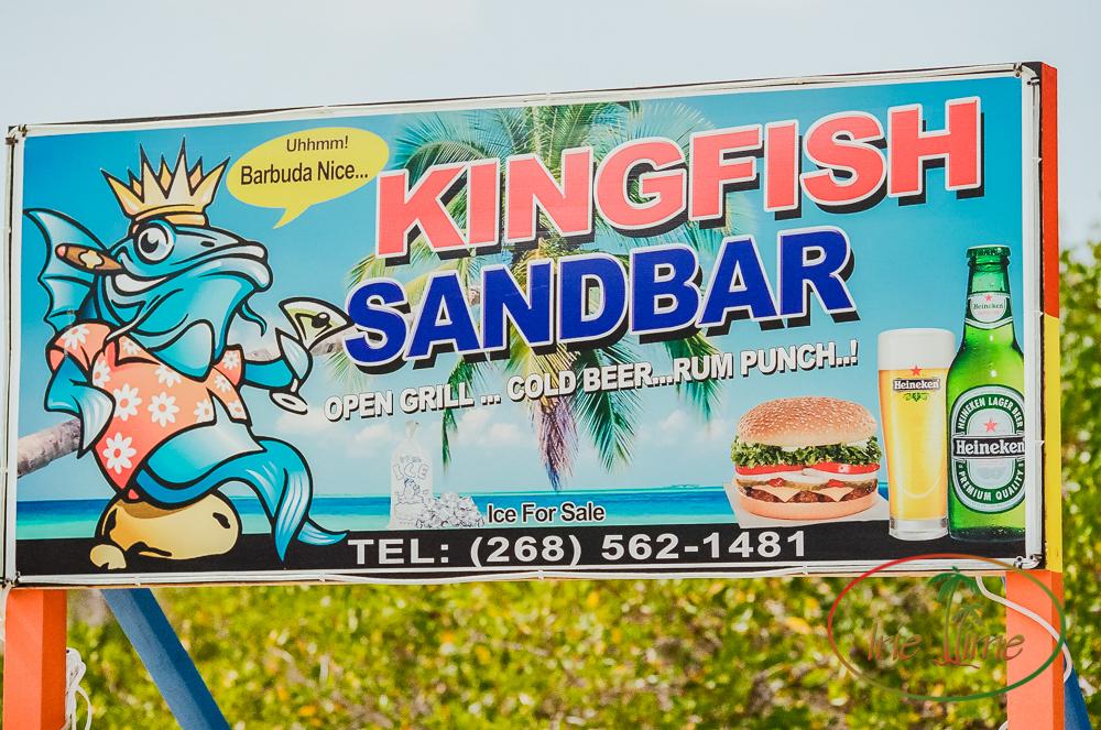 kingfish sandbar-1