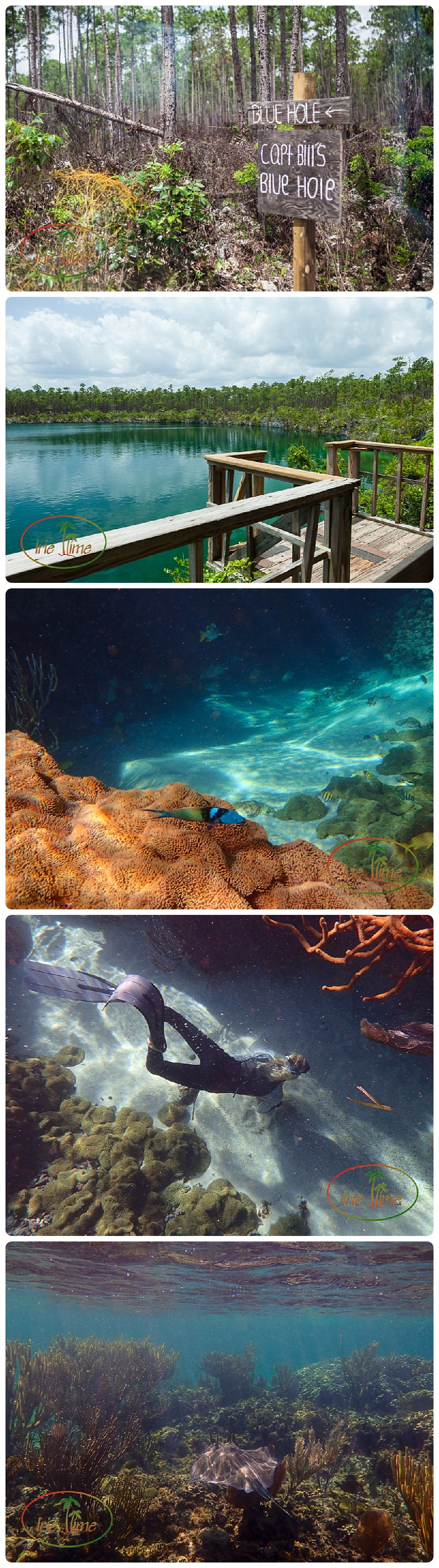 Blue Holes of Andros Bahamas #bahamas #kamalamecay #iheartkamalame #honeymoon