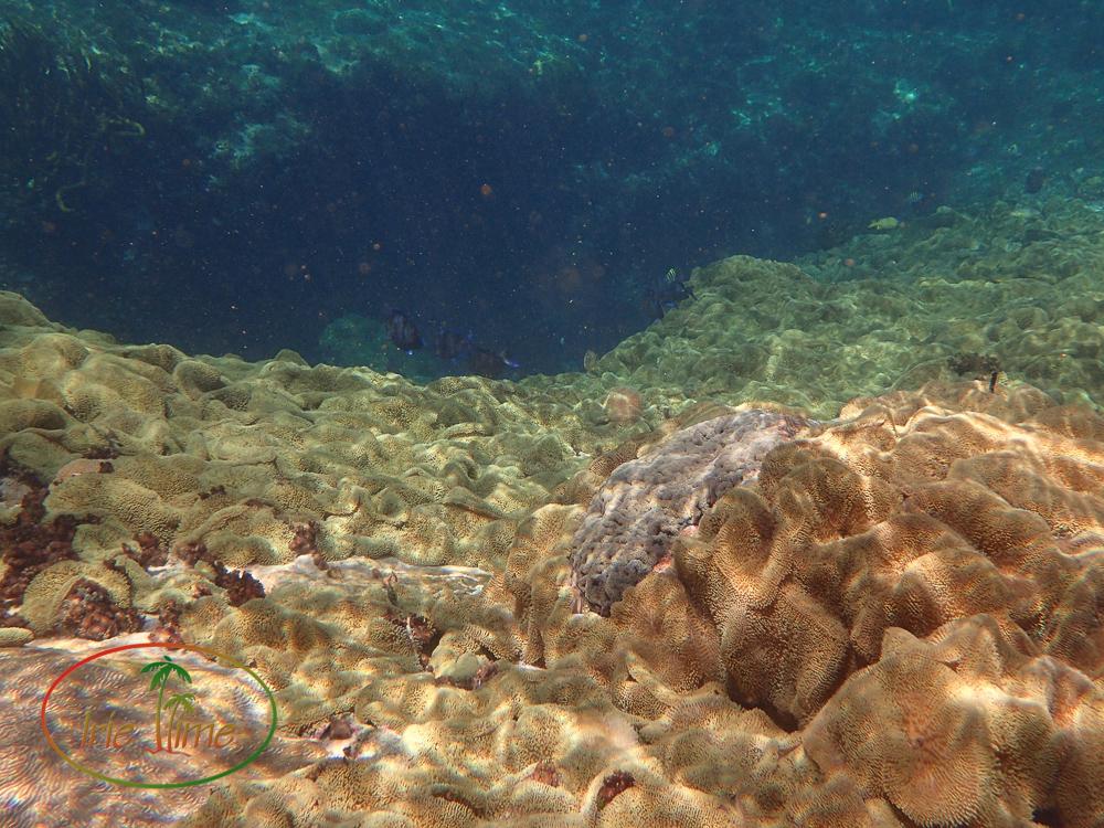 Rat Cay Blue Hole Andros Bahamas