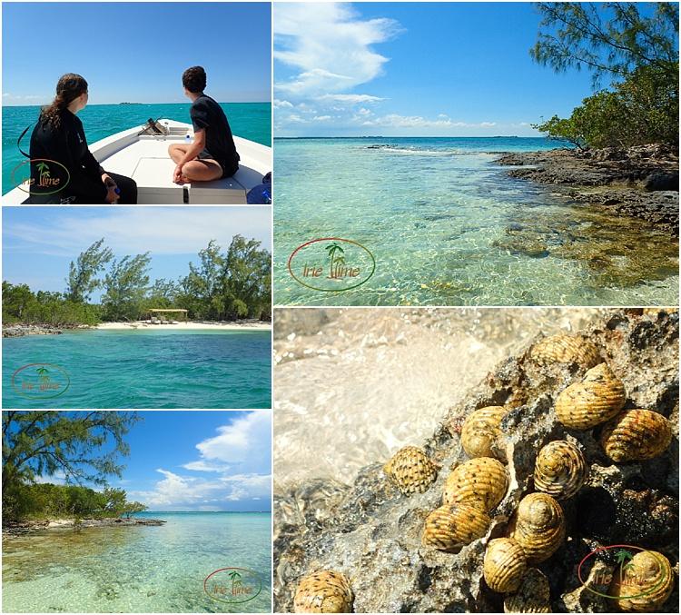 Snorkeling Diving Andros Bahamas