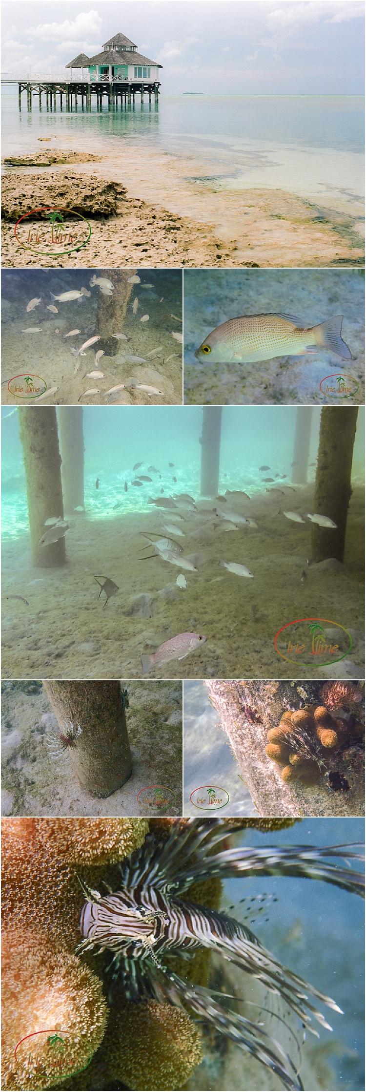 Snorkel Dive Andros Bahamas