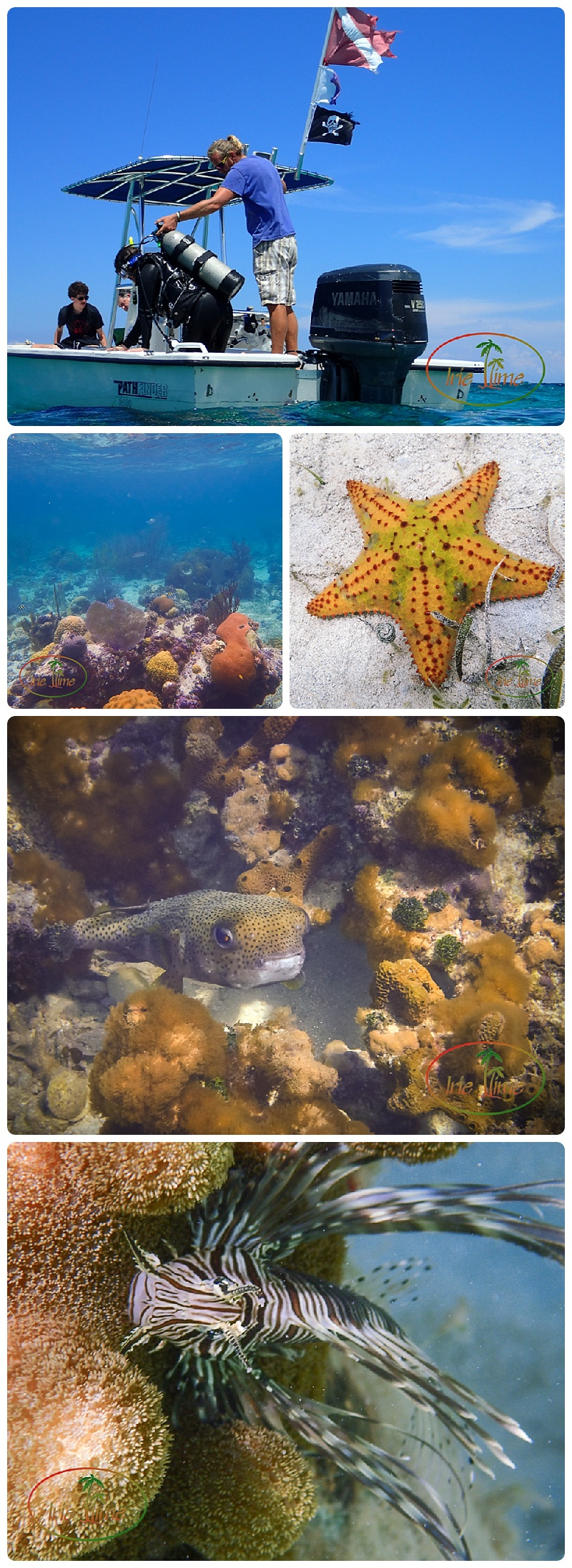 Snorkeling and Diving, Kamalame Cay, Andros Bahamas #bahamas #kamalamecay #iheartkamalame #honeymoon