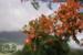 Nevis Allure L-23